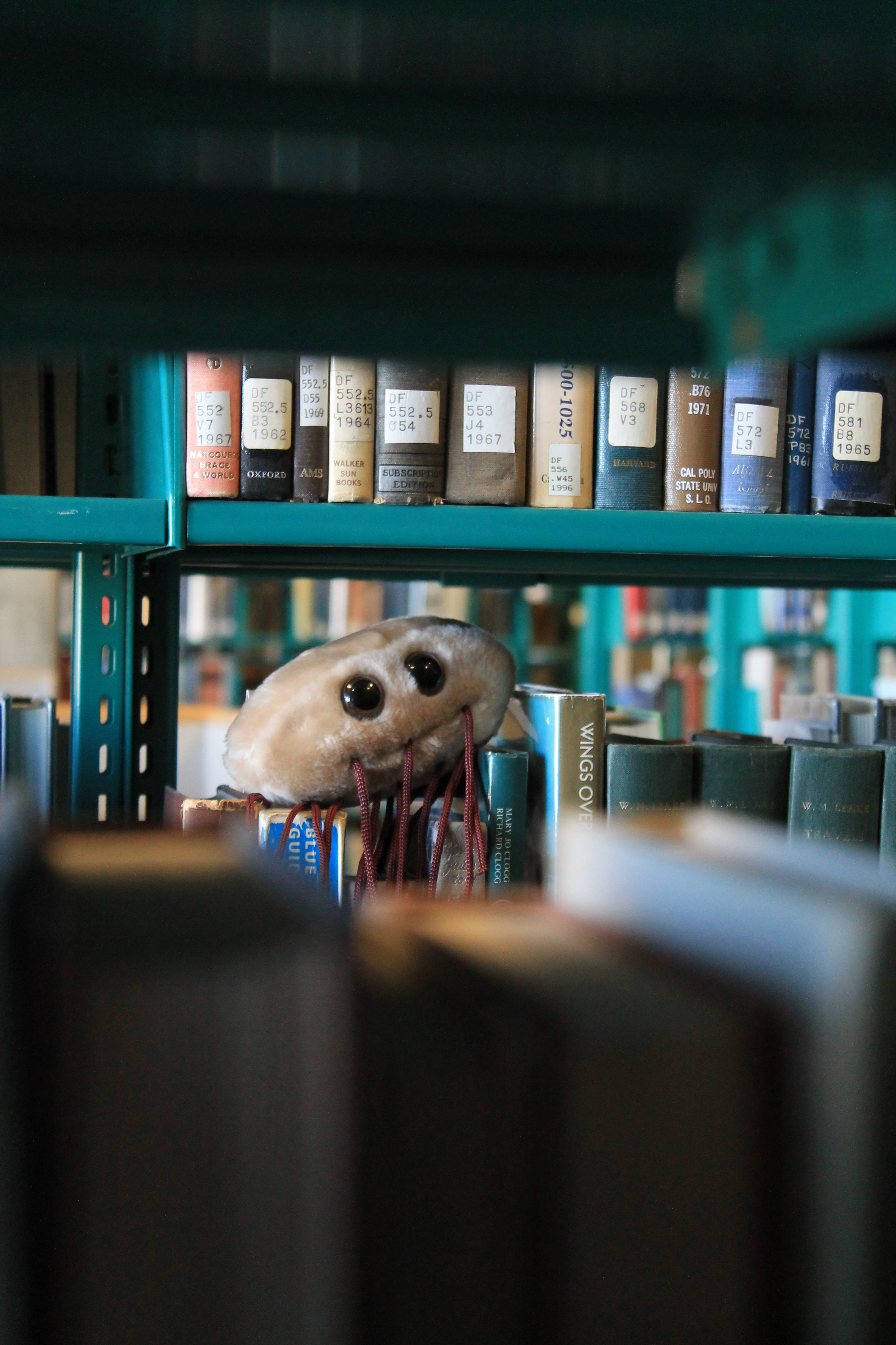 A photo of a giant microbe plush of an E. coli cell, sitting on top of a shelf of books.