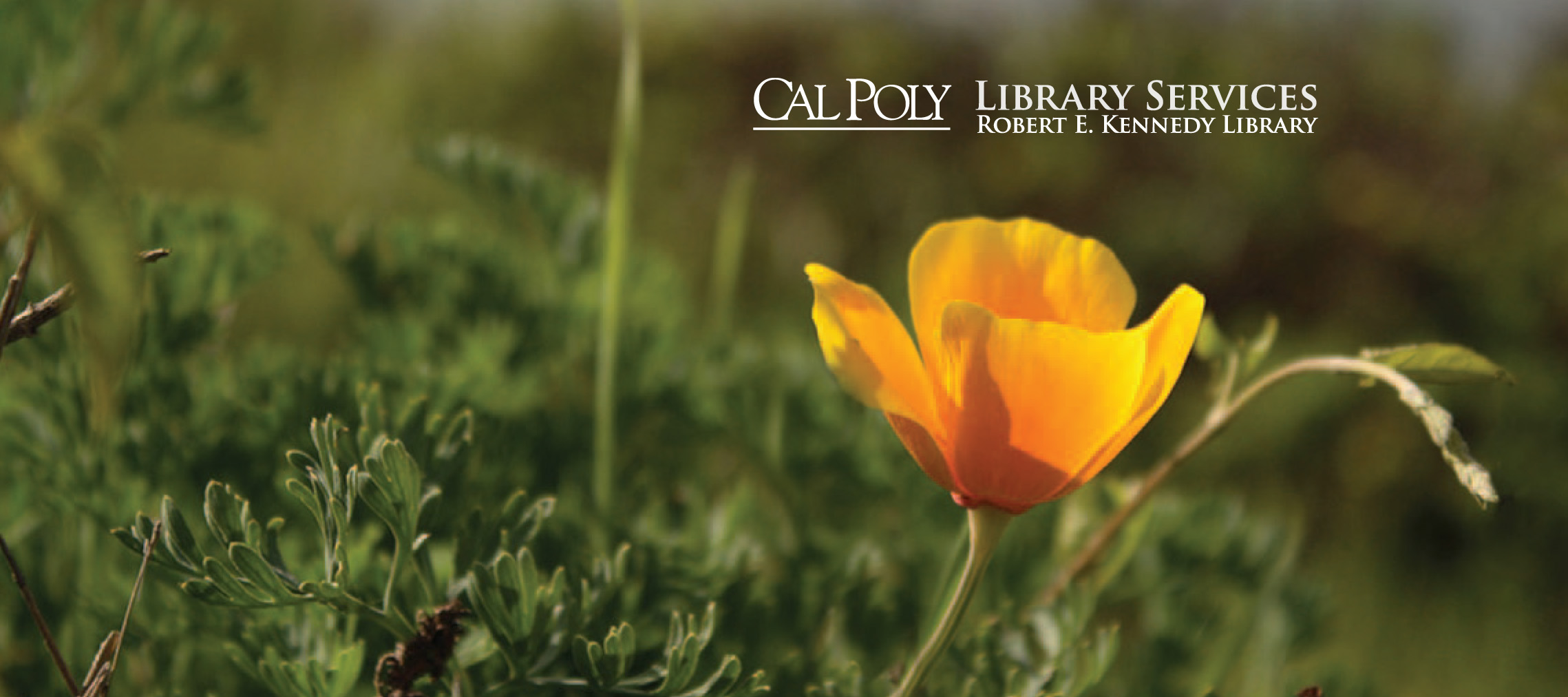 Detail of cover of Kennedy Library Annual Publication 2011-2012