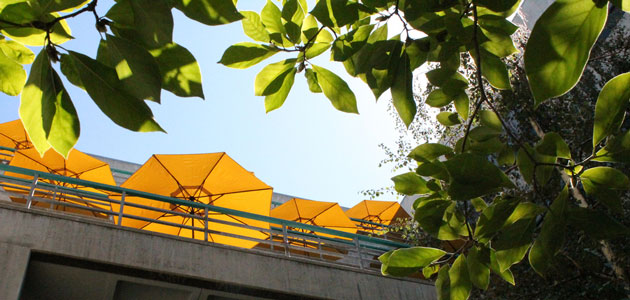 Photo of umbrellas in the atrium at Kennedy Library